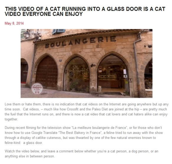 Cat Runs Into Glass Door Vine
